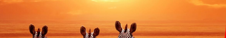 feedbackkultur-fuer-fortgeschrittene-zebra-sonnenuntergang-voegel